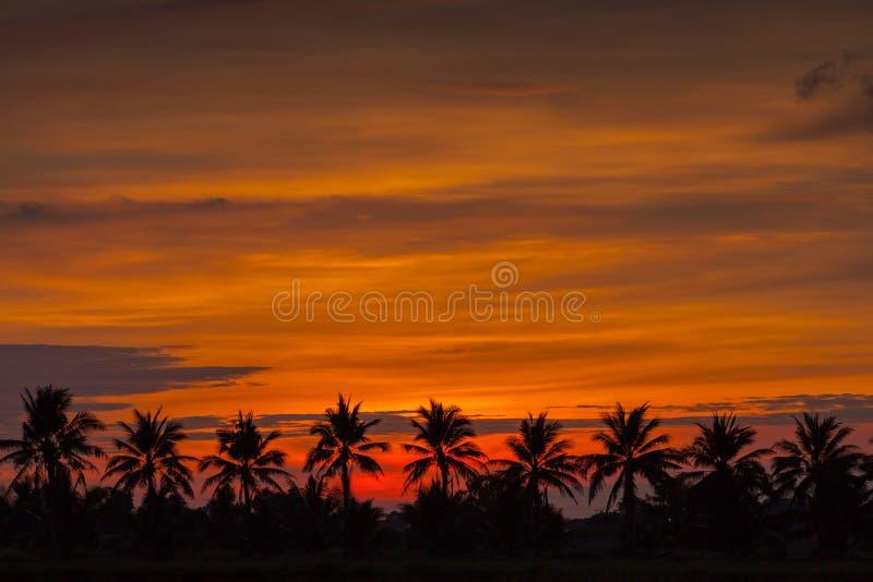 A palmeira da silhueta do sol está aumentando acima da palmeira fotos de stock