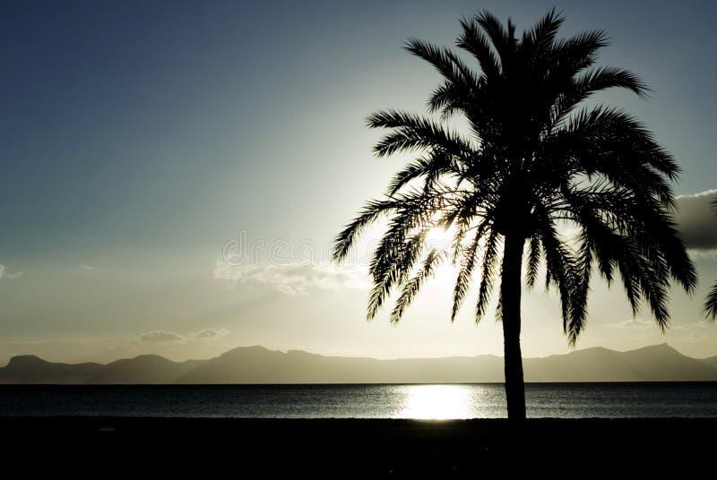 Palmeira das férias de verão imagem de stock royalty free