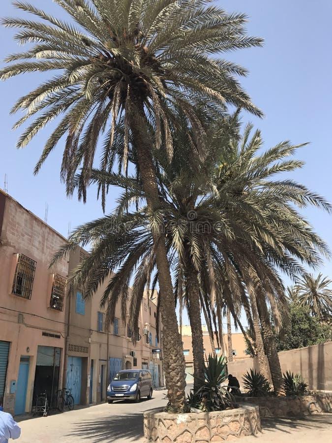 Palmeira de Marrocos imagem de stock royalty free