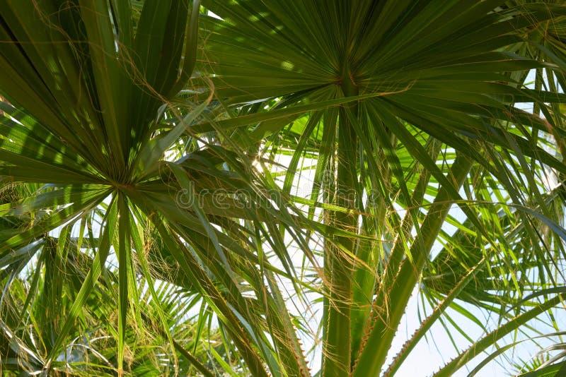 A palmeira deixa o fundo em um dia ensolarado imagens de stock