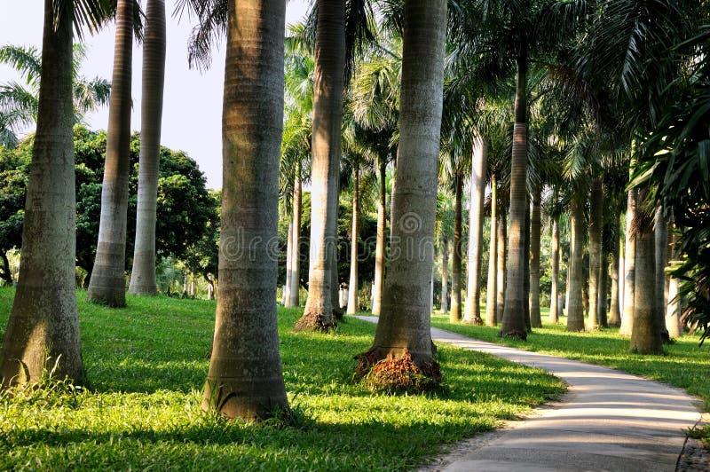 Palmeira Dentro Horizontalmente Fotografia de Stock Royalty Free