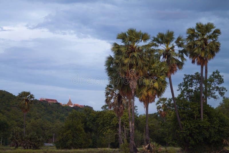 Palmeira do açúcar no tempo crepuscular fotografia de stock