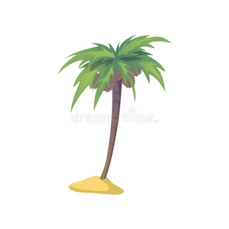 Palmeira do coco com porcas Ilustra??o do vetor no fundo branco ilustração stock