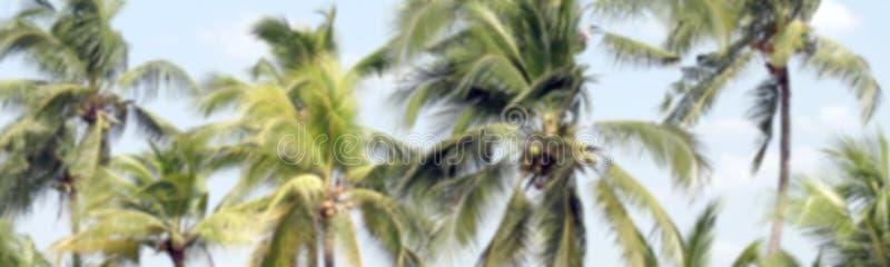 Palmeira do coco da imagem borrada para o borrão do fundo do coco da plantação, da palma de coco para o fundo da bandeira ou a pr fotografia de stock royalty free