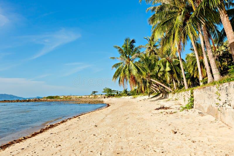 Palmeira do coco no Sandy Beach branco Vista panor?mico Vista bonita da praia ensolarada limpa calma foto de stock