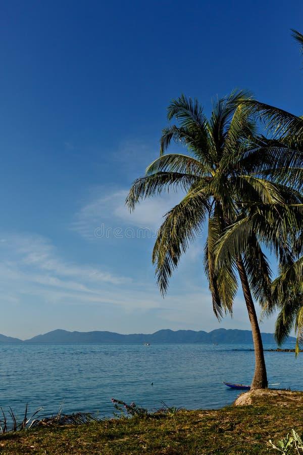 Palmeira do coco no Sandy Beach branco Vista panor?mico Copie o espa?o imagens de stock royalty free