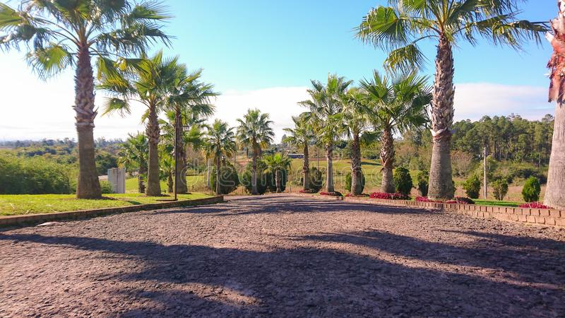 Palmeira do jardim decorativo usada ajardinando fotos de stock royalty free