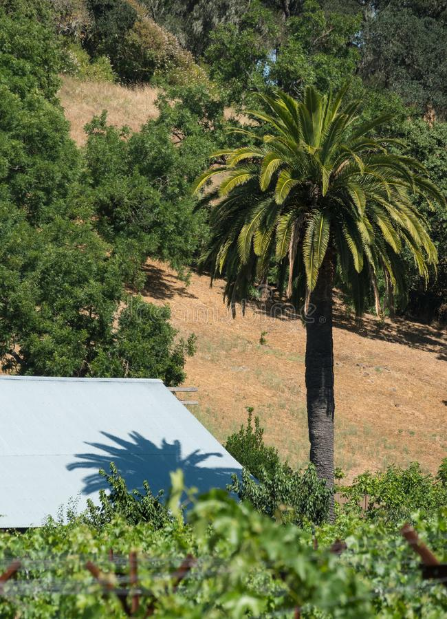 Palmeira do vinhedo, sombra do telhado foto de stock royalty free