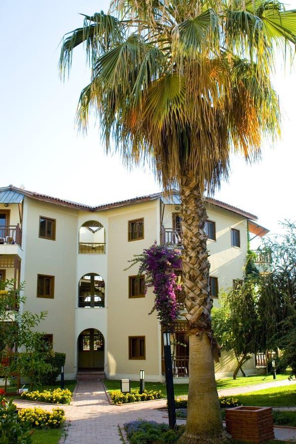 Palmeira e casa foto de stock