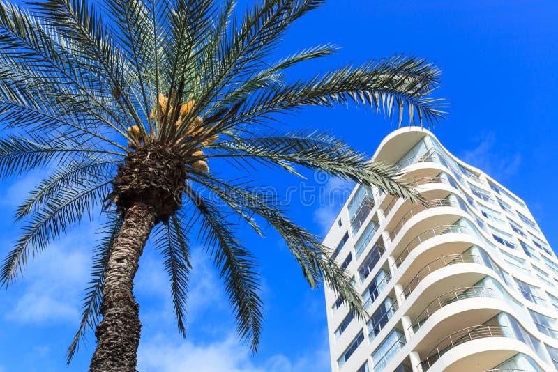 Palmeira e edifício moderno imagens de stock