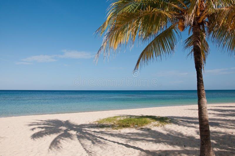 Palmeira e oceano do coco foto de stock royalty free