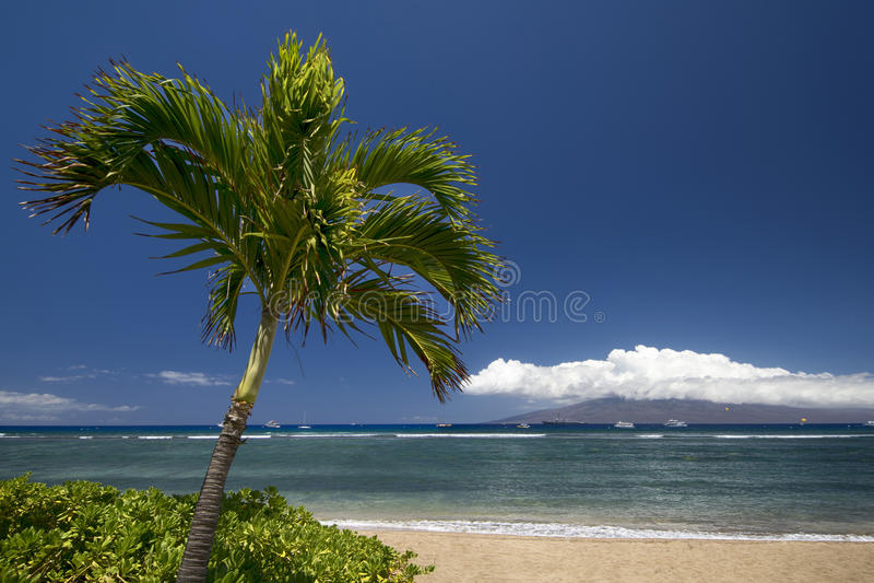 Palmeira e praia com a ilha de Lanai Lahaina, Maui, Havaí foto de stock royalty free