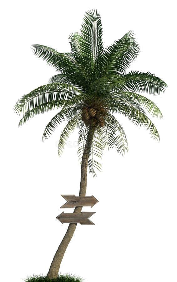 Palmeira e setas de madeira ilustração stock
