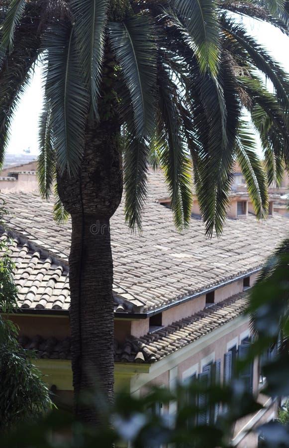Palmeira e telhado telhado imagens de stock
