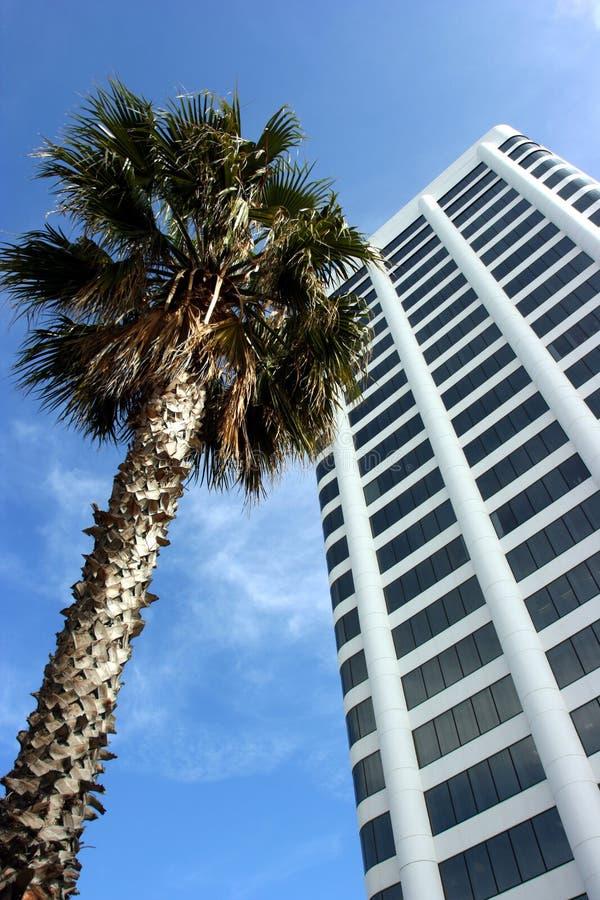 Palmeira em Califórnia fotos de stock