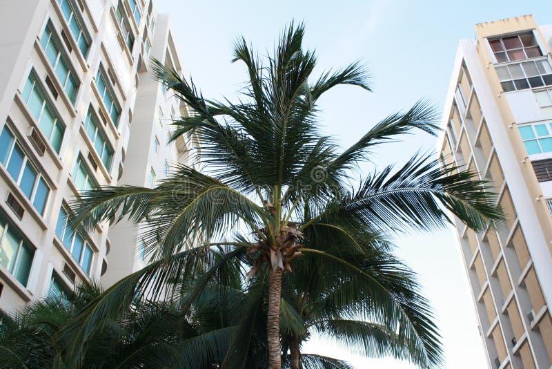 Palmeira em Porto Rico imagem de stock