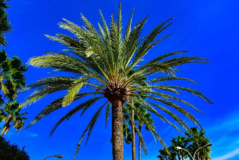 Palmeira em um céu azul foto de stock royalty free