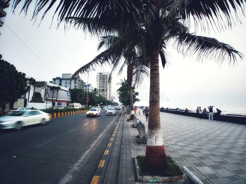 Palmeira em um seaface foto de stock