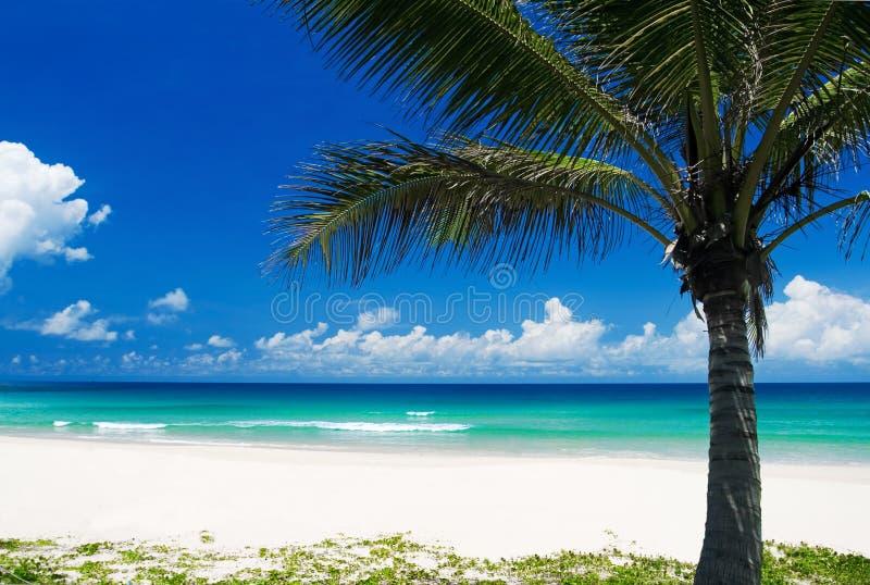 Palmeira em uma praia tropical imagens de stock
