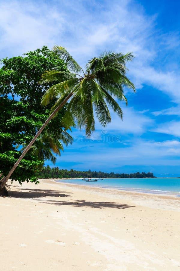 Palmeira em uma praia tropical em Khao Lak Tailândia fotografia de stock