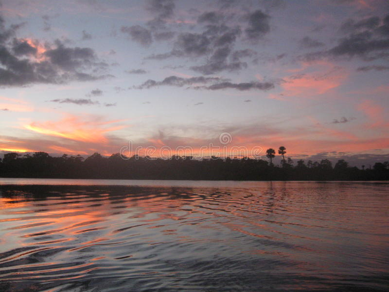 Palmeira florida fotografia de stock royalty free