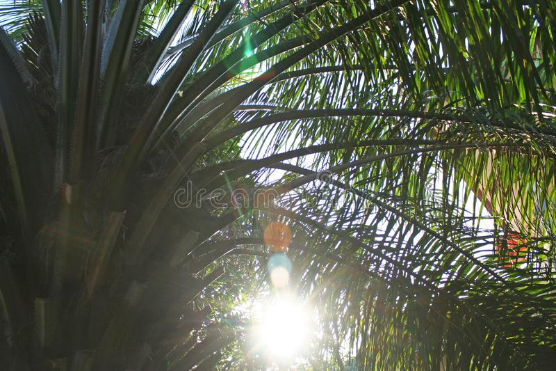 Palmeira na noite foto de stock royalty free