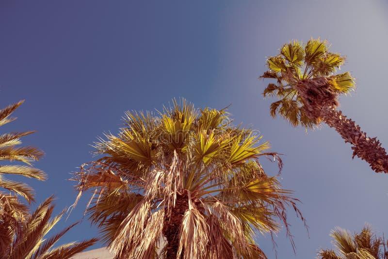 Palmeira na perspectiva do céu do verão imagem de stock royalty free