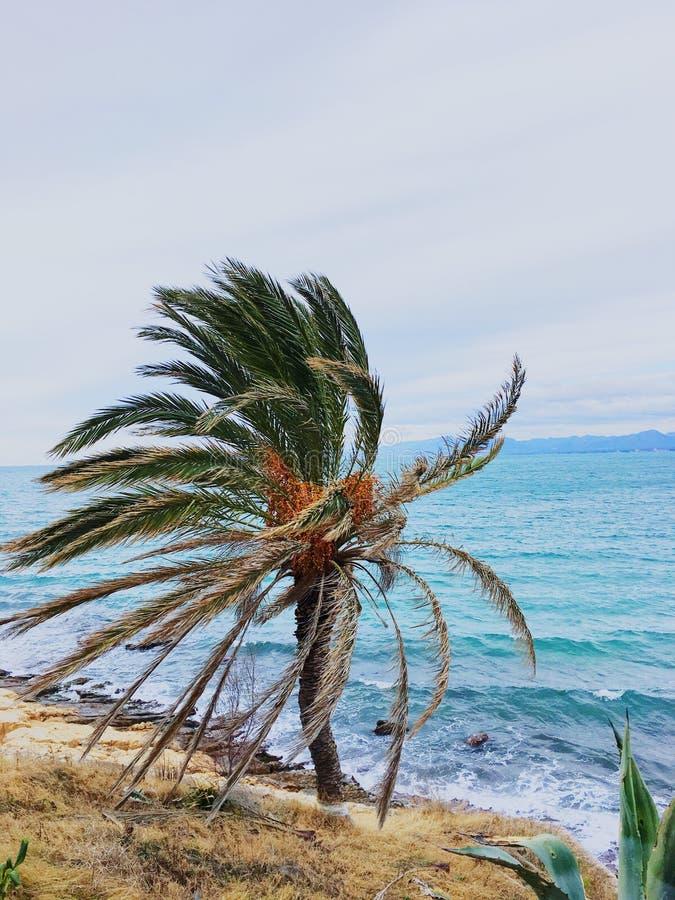 Palmeira na praia de Salou imagens de stock royalty free