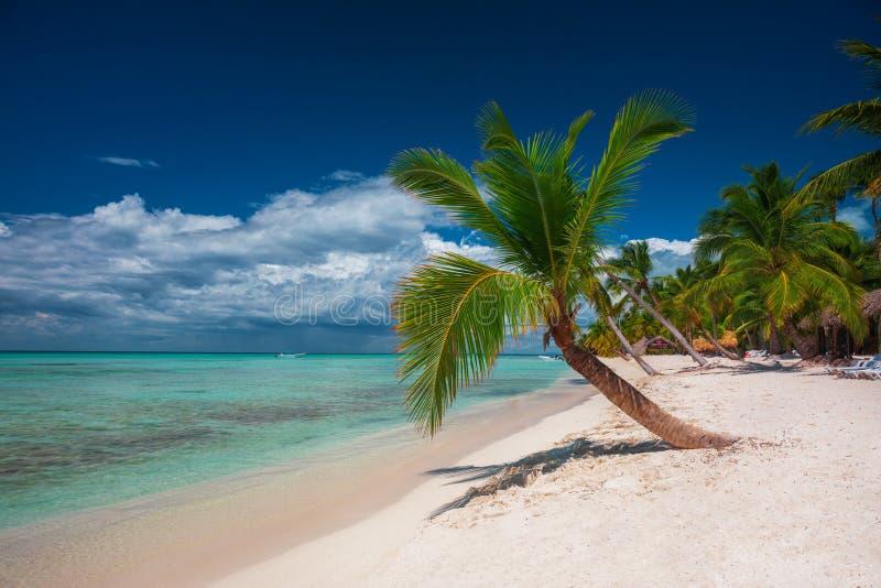 Palmeira na praia tropical Saona da ilha, República Dominicana foto de stock royalty free