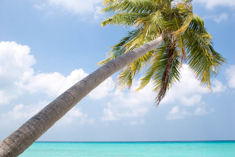 Palmeira no dia ensolarado imagem de stock