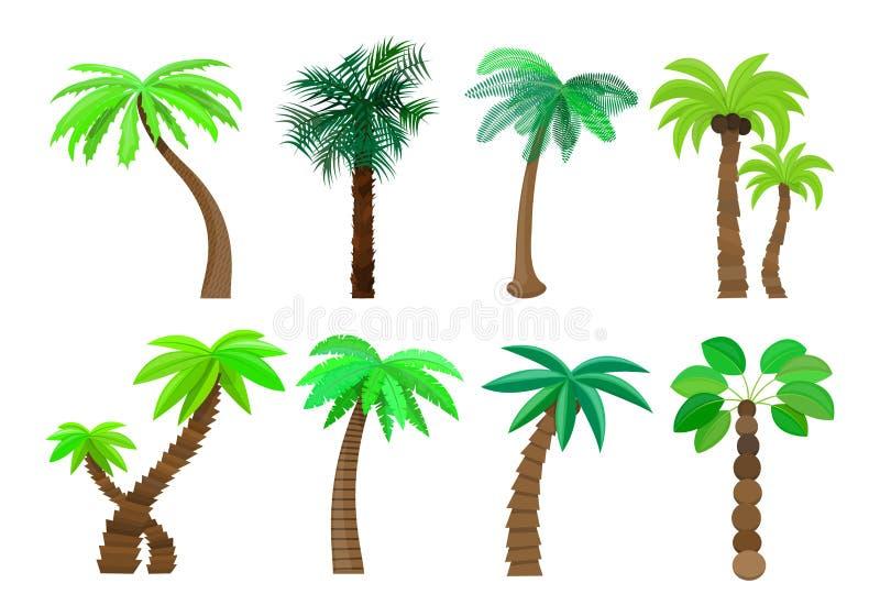 A palmeira no estilo dos desenhos animados ajustou-se em uma ilustração branca do vetor do fundo ilustração stock
