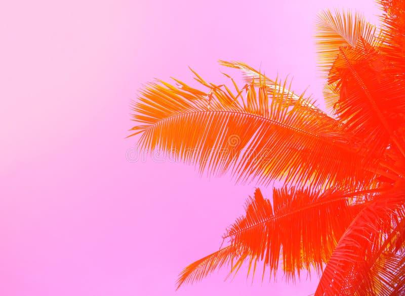 Palmeira no fundo do céu Ornamento em folha de palmeira Rosa e foto tonificada alaranjada imagem de stock