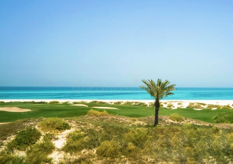 Palmeira no golfo árabe A ilha de Saadiyat Abu Dhabi imagens de stock