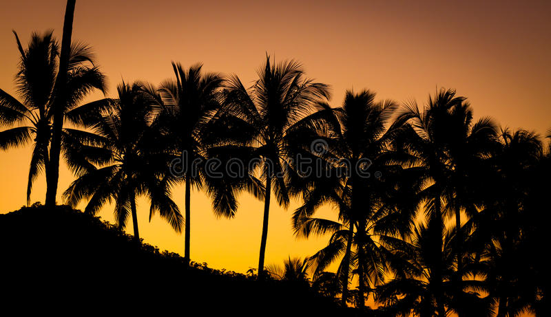 Palmeira no por do sol bonito imagem de stock royalty free