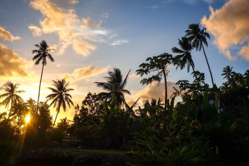 Palmeira no por do sol na ilha de Moorea fotografia de stock