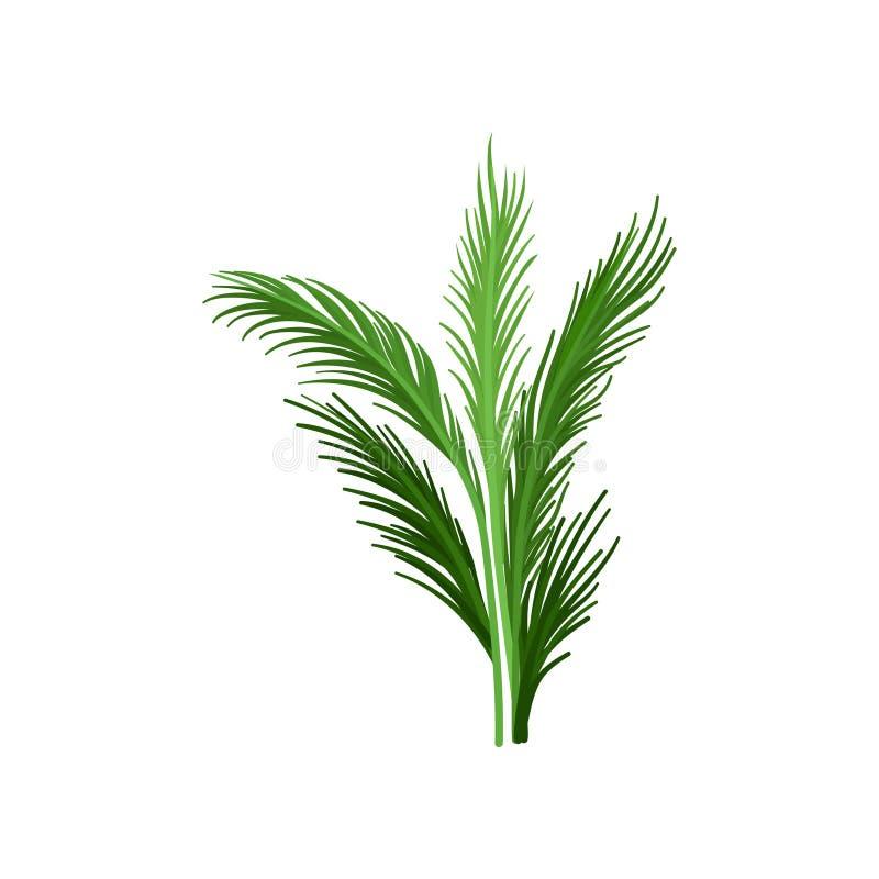 Palmeira nova com as folhas pinulados verdes Planta tropical Elemento liso do vetor para anunciar a bandeira ou o inseto da praia ilustração royalty free