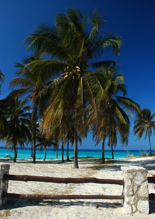 Download Palmeira (Palmaceae) foto de stock. Imagem de hotel, coco - 100790