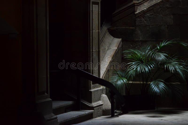 Palmeira pequena na rua escura, quarto gótico em Barcelona imagem de stock royalty free