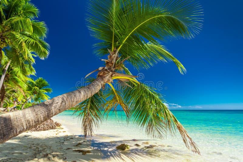 Palmeira que overhanding a lagoa de convite na ilha de Fiji fotografia de stock royalty free