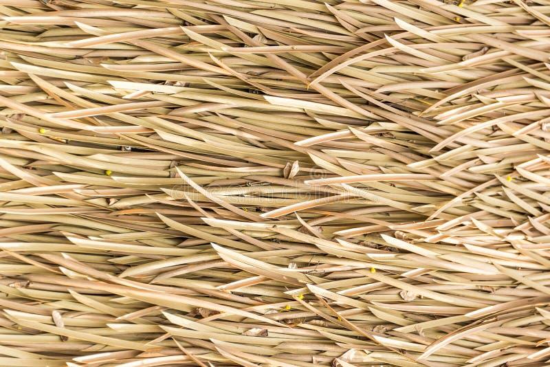 A palmeira sae do telhado fotos de stock