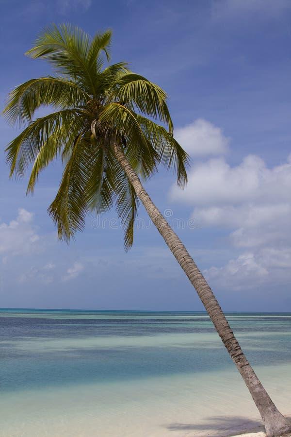 Palmeira sobre a água azul imagens de stock