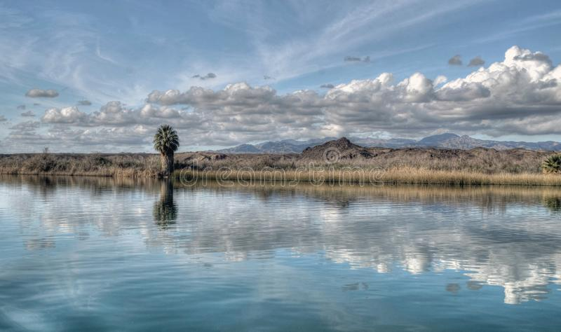 Palmeira solitária ao longo dos bancos do Rio Colorado no Arizona foto de stock