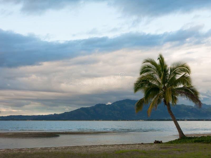 Palmeira solitária em uma praia no dia nebuloso, Fiji fotos de stock royalty free