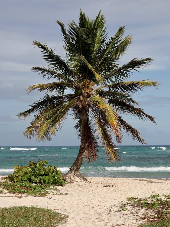 Palmeira solitária na praia tropical imagens de stock royalty free