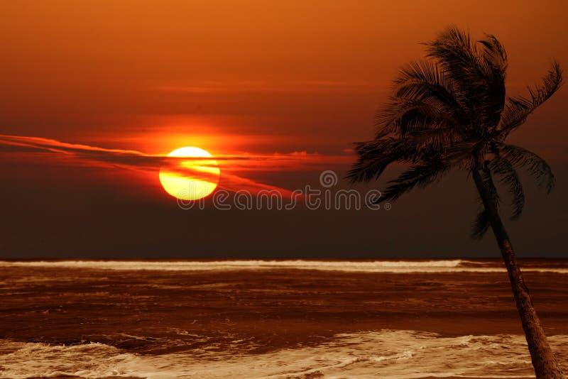 Palmeira solitária no nascer do sol com cores dramáticas imagens de stock
