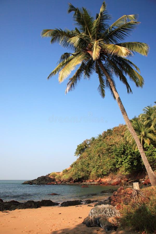 Palmeira Sunlit sobre a praia Goa imagens de stock