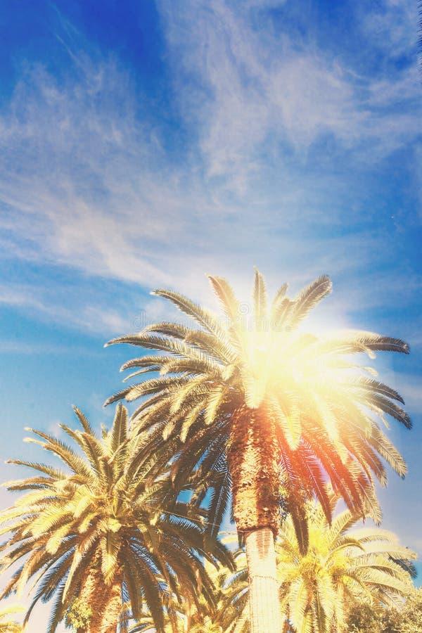 Palmeira tropical imagem de stock royalty free