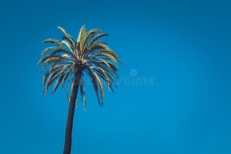 Palmeira tropical com estilo tonificado e cinem?tico retro do vintage fotografia de stock