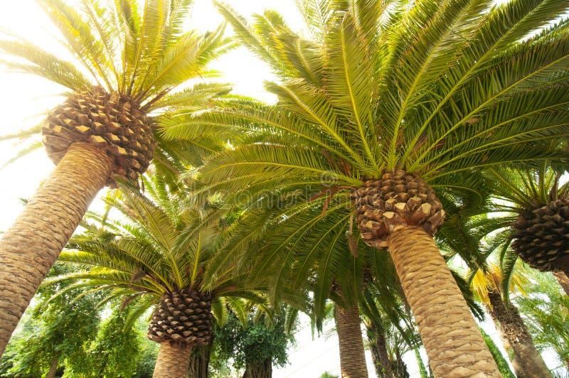 Palmeira tropical imagens de stock royalty free