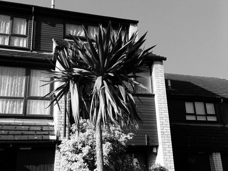 Palmeira tropical exótica do vintage retro fotos de stock